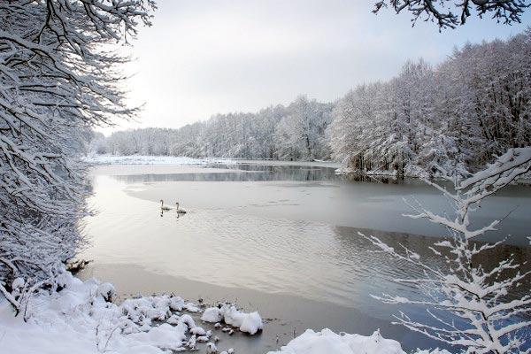 Image hiver - Dans mon jardin d hiver ...